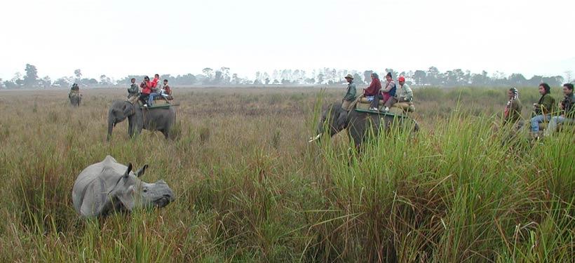 Elephent Safari