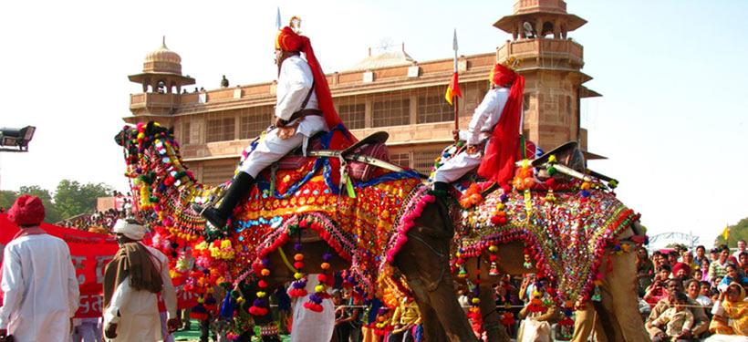 Rajasthan Camel