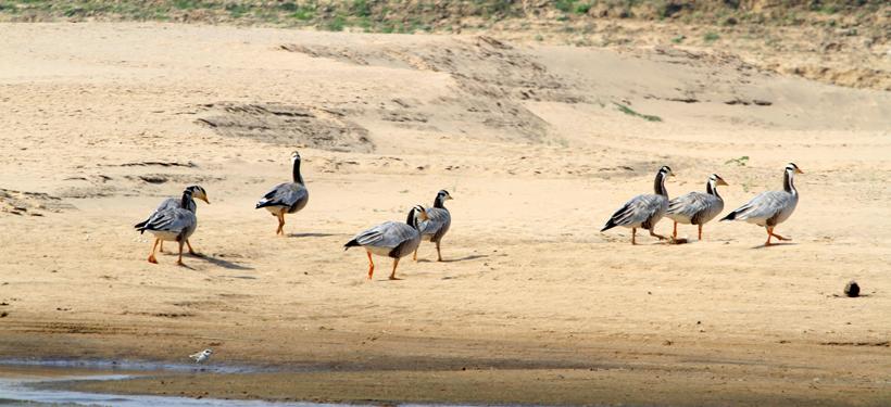 Chambal Sanctuary5