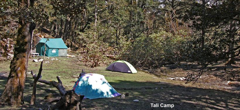Tali Camp